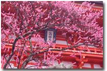 日本循環器学会(JCS)2010